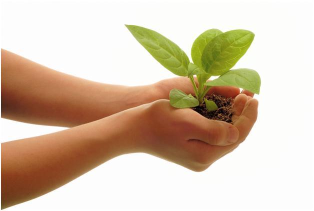Το πράσινο λαχανικό που εκμηδενίζει Αλτσχάιμερ, καρκίνο και χοληστερίνη